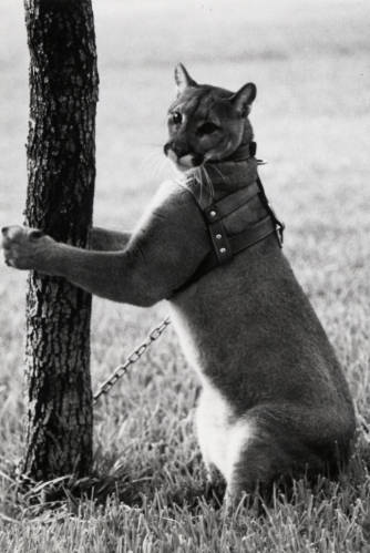 Shasta standing with her paws on a tree